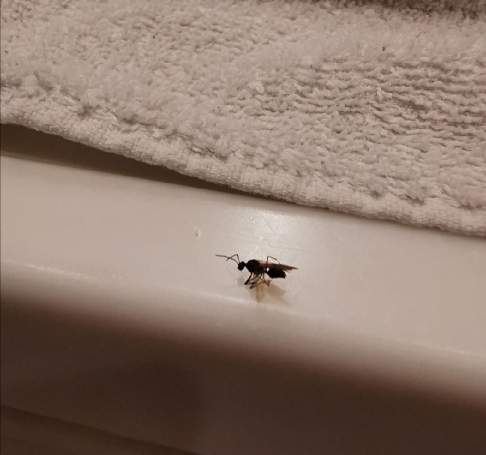 これはシロアリですか?
