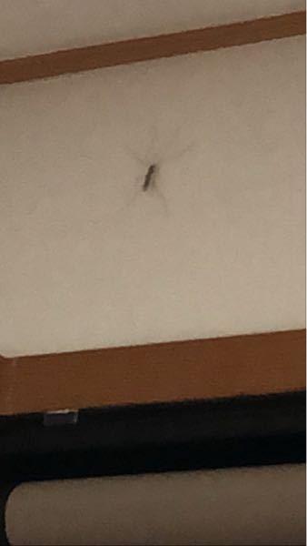 さっき家に虫が出たんですけどこれって何の虫ですか?巨大化した蚊みたいな感じですけどそれは有り得ませんよね、、家に何度も入ってきているので教えてください。あとこの虫はなにかしらの危害を及ぼしますか??