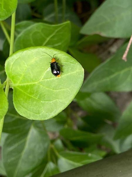 こちらの虫は何と言う虫でしょうか?教えてください!よろしくお願いします☺︎