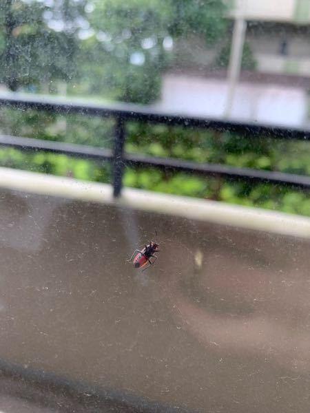 この虫は何の虫でしょうか。 最近よく見かけるようになりました