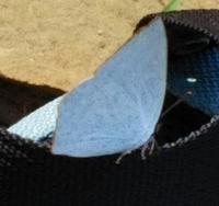 蝶の名前を教えてください、 岐阜県川辺権現山で、 撮影20210925
