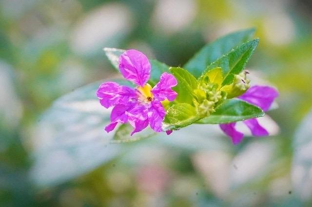 この花の名前を教えて下さい。 宜しくお願いします。