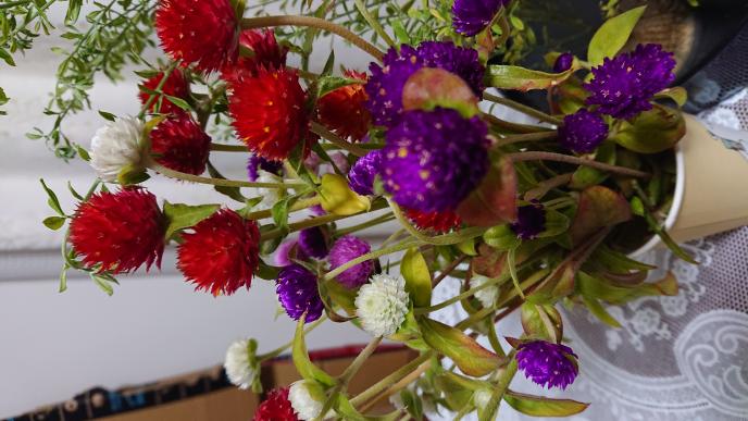 お世話になります 写真の花ですがなんでしょうか?