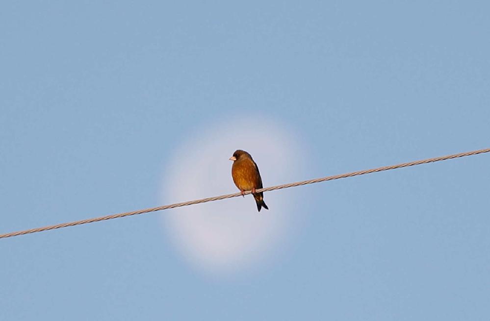 背景の月がボケました。 鳥と月の両方に、ピントを合わせるのは無理でしょうか。 鳥までの距離=20m 合成しないと無理でしょうか、 ご教示お願いします。