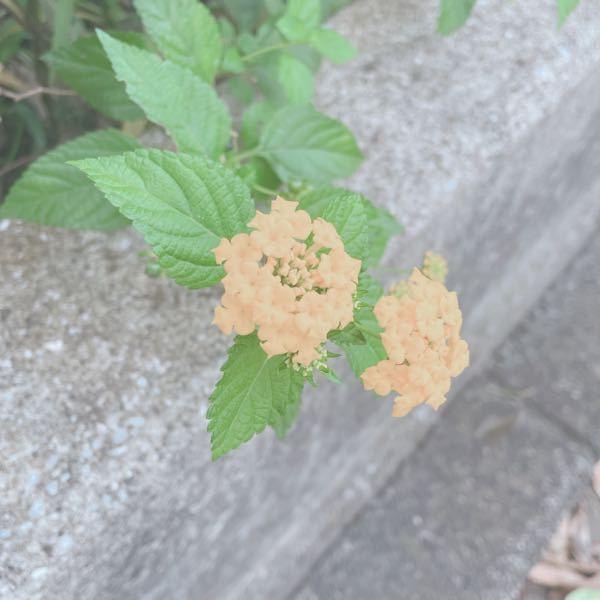 この花の名前はなんですか?
