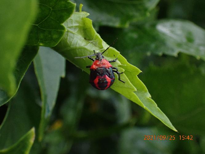 この幼虫の名前教えて下さい。