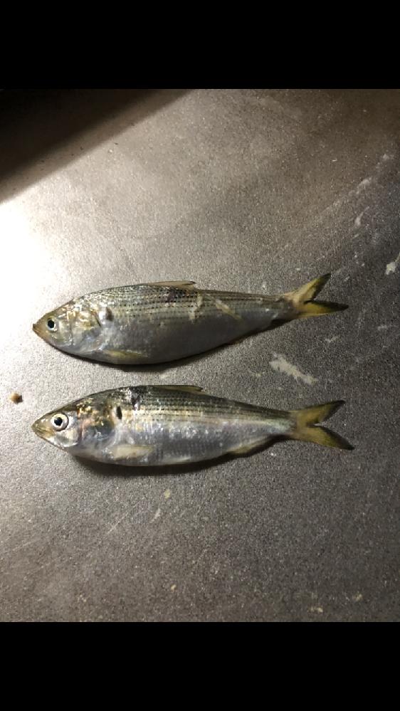この魚の名前は何でしょうか