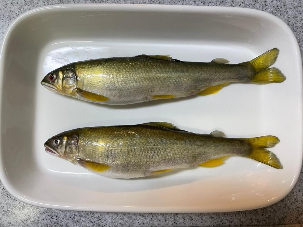 この鮎は天然ですか?養殖ですか? 色々調べてみても違いが初心者なもんで中々分かりません。魚に詳しい方教えてください。