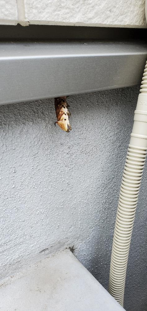 これなんの幼虫ですか?