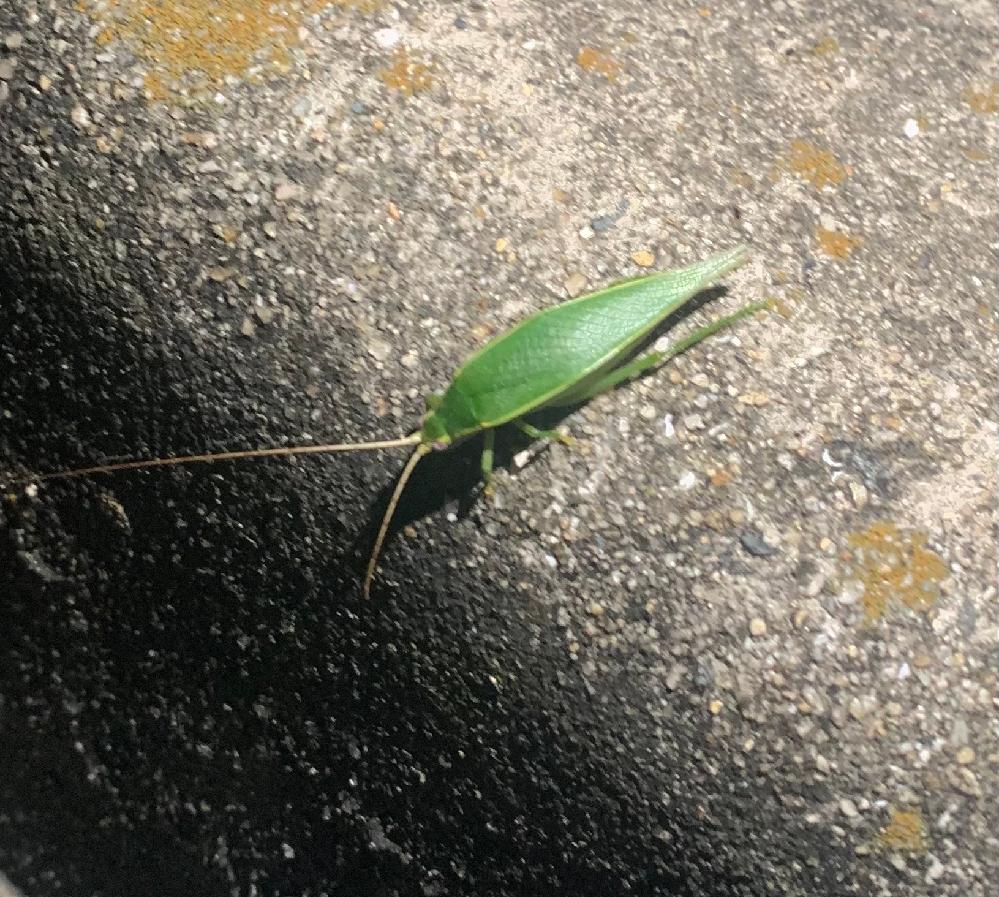 この虫の名前ってなんですか?