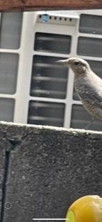 これは何という野鳥ですか?