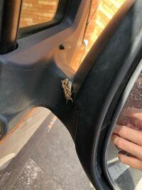 車に何かがいました。気持ち悪いので退かしたかったのですが、固くて動きませんでした。この生き物はなんですか?