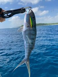 この魚の名前を教えてください。 場所は宮古島です。
