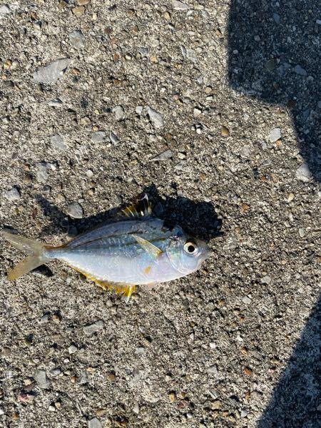 この魚は何ですか