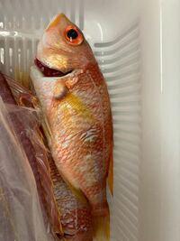 この魚の名前わかりませんか?食べれますでしょうか?長崎の五島灘で釣れた魚です。手のひらくらいの大きさです。よろしくお願い致します