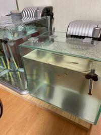 急に水槽が濁りだしたことについて 2年前から飼っているグッピー水槽が、一週間前から急に濁りました。 左の水槽と比べると、全く違うのがわかると思います。一週間前は、右の水槽も透明でした。  魚の数も変わらず、水換えの頻度、フィルターの変える頻度も同じです。水換えは5日に1回ほど3分の1変えてます。フィルターは月1くらいで変えてます。フィルター変えたときは水は変えてません。  今まで飼い始めのと...