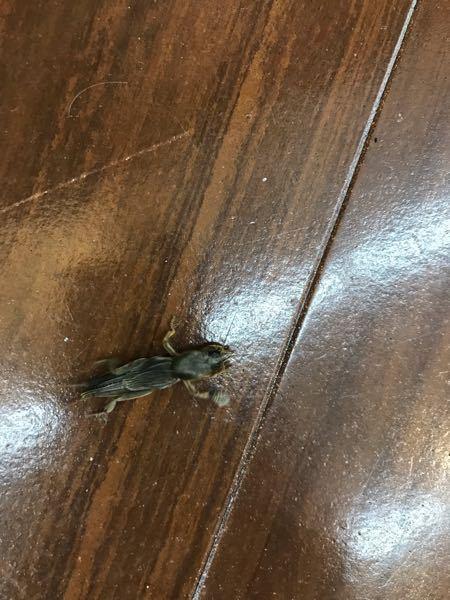 この虫なんですか? 適当な写真で申し訳ありません。