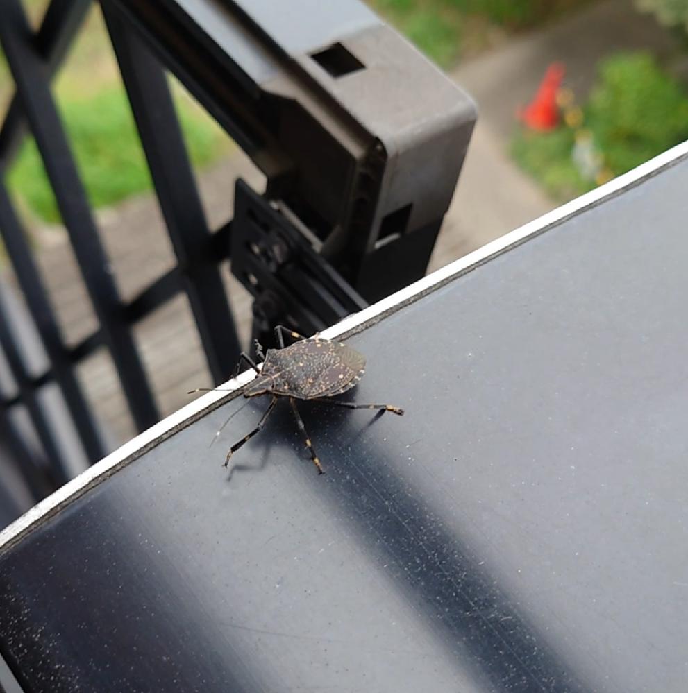 家の中で見慣れない虫を捕まえました。 この虫は何という虫なのかどなたか教えてください。 できれば詳細もお願いします。 https://realestate.yahoo.co.jp/knowledge/chiebukuro/detail/14163033399/