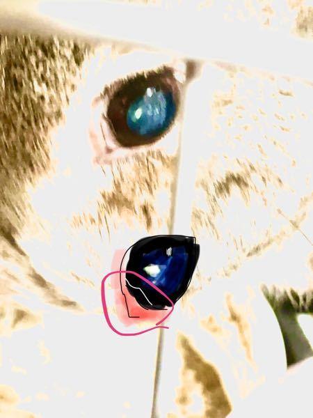 飼っているうさぎの目頭に透明な膜みたいなのが見られたのですが、大丈夫でしょうか…それと、瞼が二重になって見えるのも両瞬膜とかいうものですか、?病院行った方がいいですか?(;;)