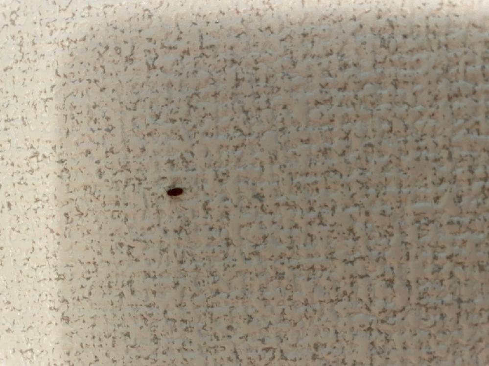 2、3日前くらいから家の中でゴキブリの赤ちゃんみたいな小さな虫を見るようになりました。 動きがなく佇んでいる所を発見してるため、簡単にティッシュで潰せます。 ゴキブリかと思い始めたら急に不安になり家の中をウロウロして探してしまう状況に陥ってます。 画像見にくいですが教えてください。 よろしくお願いします。