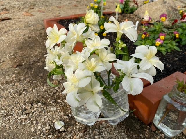 この花の名前が分かる方おられたら教えてください。