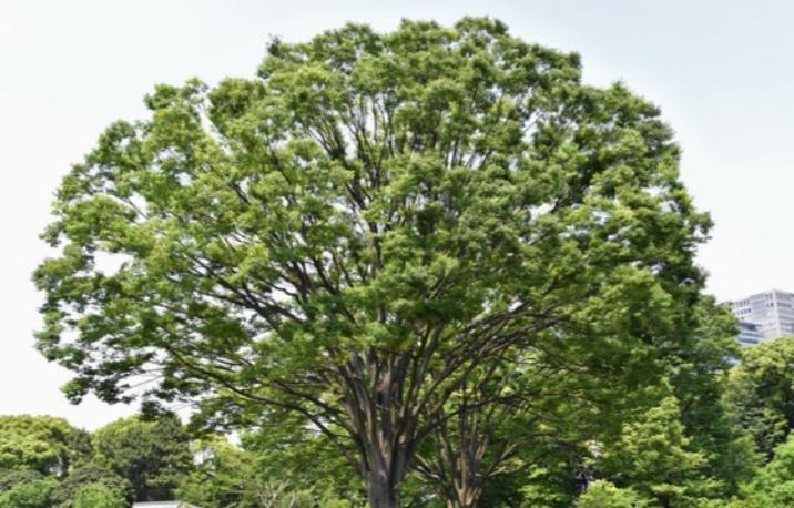 木にも寿命がありますか? よく見掛ける木の寿命はどれくらい?