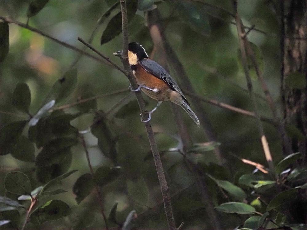 この写真の鳥の名前を教えてください。 よろしくお願いいたします。