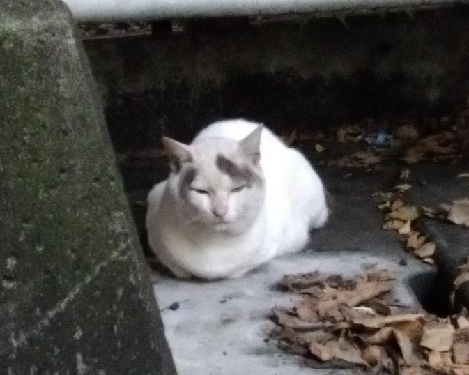 猫が好きな方にお聞きします。 この子はイケメンですか?ブサカワですか?ブサイクですか?