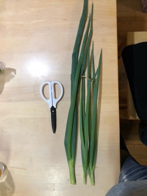 家庭菜園のネギの食べ方について。どのように使いますか? 春に薬味用に購入した小ネギの根っこの部分を家庭菜園に植えて そのままにしていました。写真のような結構立派なネギになりました。 薬味用に細かく切るには葉が少し硬いように思いました。 どのように食べるとおいしく食べられると思いますか。 私は葉ネギとして鍋に入れてみようかなと思っとります。