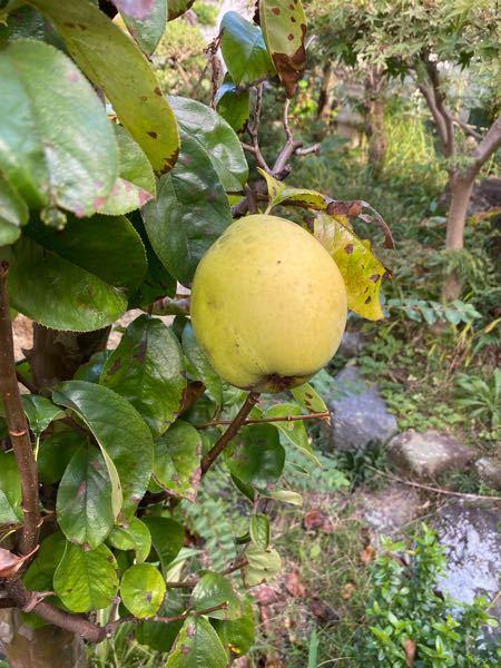 この写真の果実は何という物でしょうか?