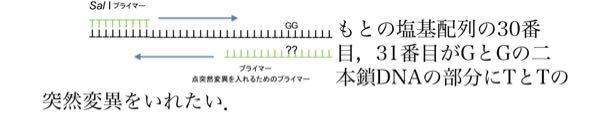 下の図に部位特異的突然変異を入れるためのプライマーを設計したいです。プライマーの配列を5'-○○○○○**○○○○○○○○○-3'(*は塩基を入れる)のように回答していただきたいです。