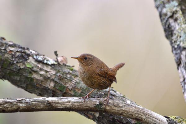 この鳥の名前、なんですか?