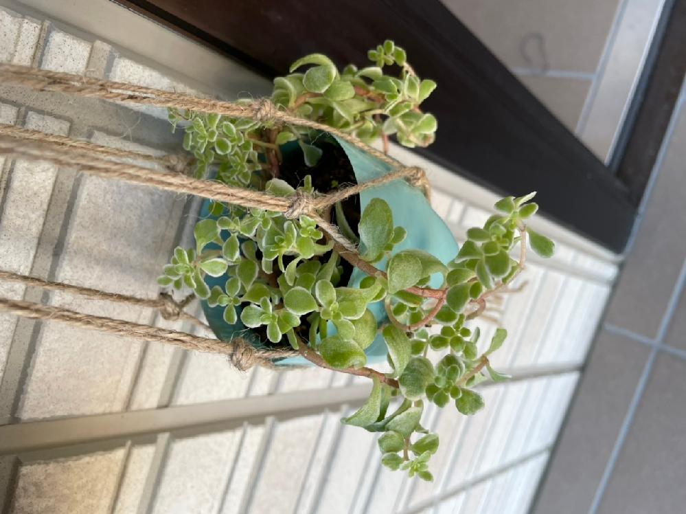 この植物の名前を教えてください。 頂き物なのですが、育て方が分からないので調べたいです。 お願いします。