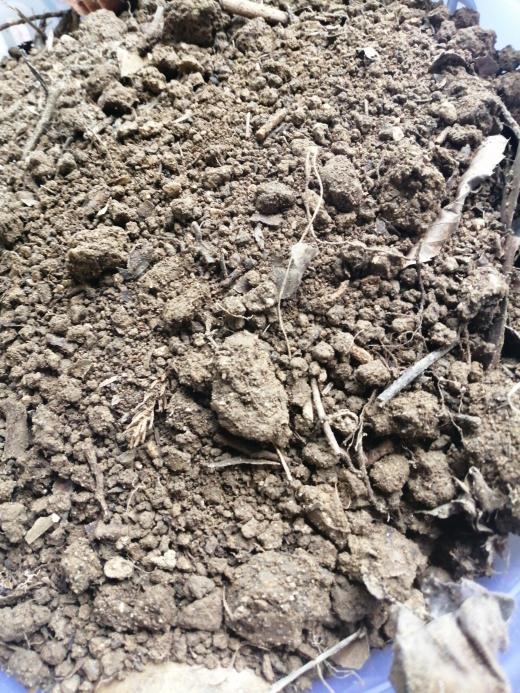 近くの山から土とって来ました これ家庭菜園に使えますか? エンドウ豆を育てようとしています