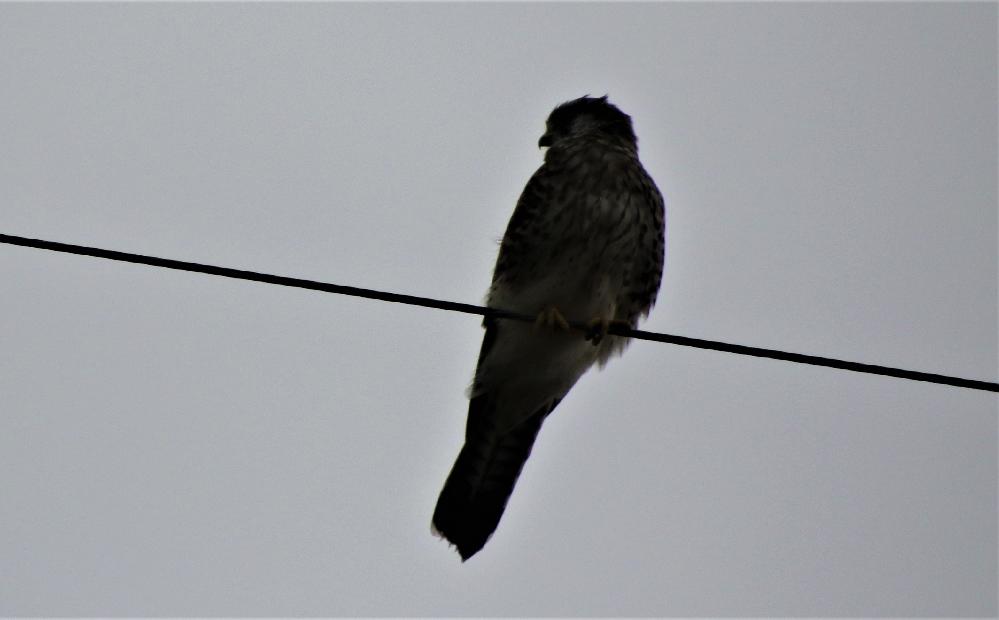 この鳥の名前を教えて下さい。