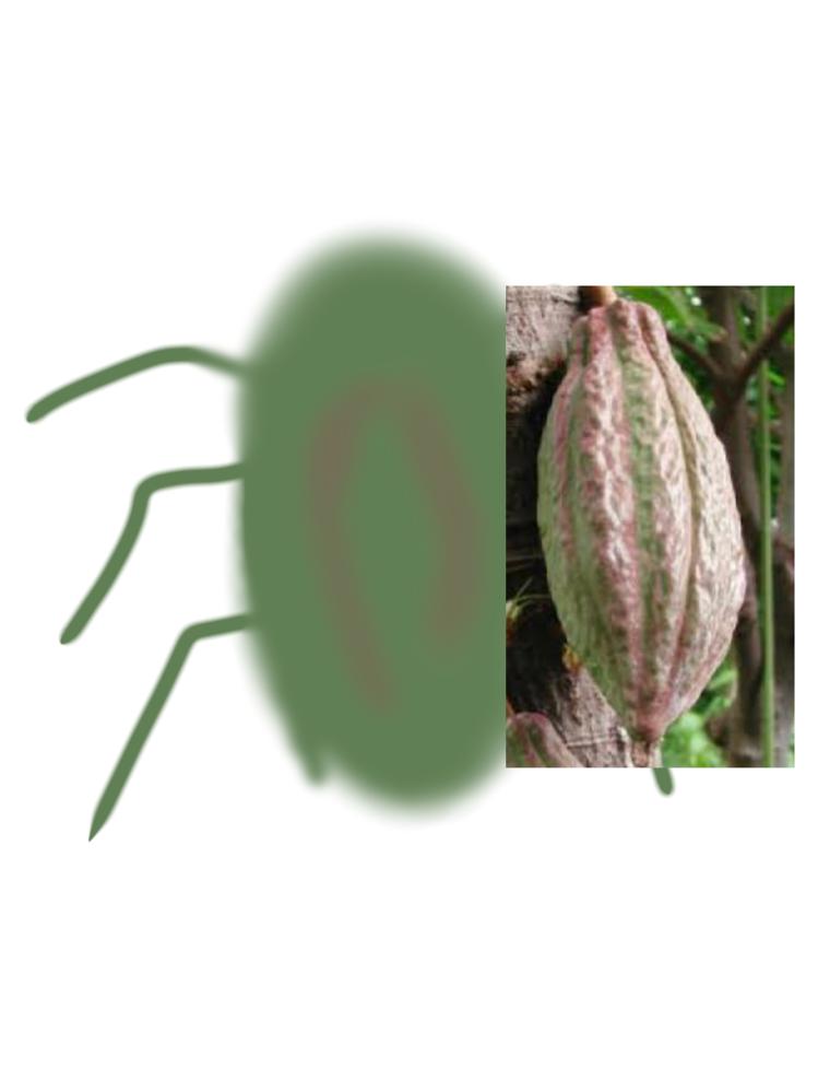 今日、庭で見たことない大きな虫を見かけたのですがいくら調べても名前が分からずモヤモヤしています 特徴は絵に書いてみました。下手ですが… ・緑色(黄緑?)で足が6本あったので絶対昆虫です ・カカオを連想させる緑と赤みたいな変な色してました ・5センチはありました。第一印象でっか!!って感じです ・見た感じ厚さは薄めの体でおしりの近くに2本のつの?みたいなのがありました 上半身は物陰で隠れていたので見れてませんがこれだけで分かる虫に詳しい方がいたらぜひ教えてください…… ネットで調べても全く似てる見た目のものがなかったのですが珍しい虫なのでしょうか