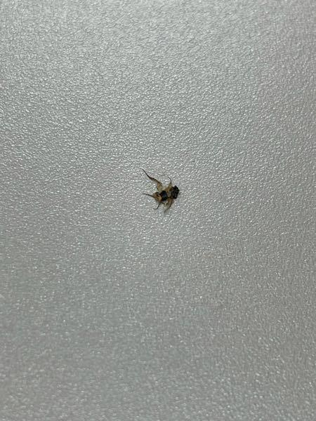 今潰しました。これなんて言う虫ですか?