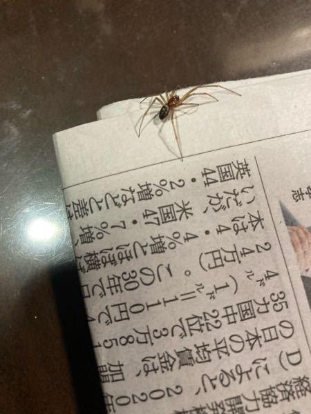 【蜘蛛写真あり】 この蜘蛛は何て名前の蜘蛛ですか?先程リビングで出現したのですが、、、