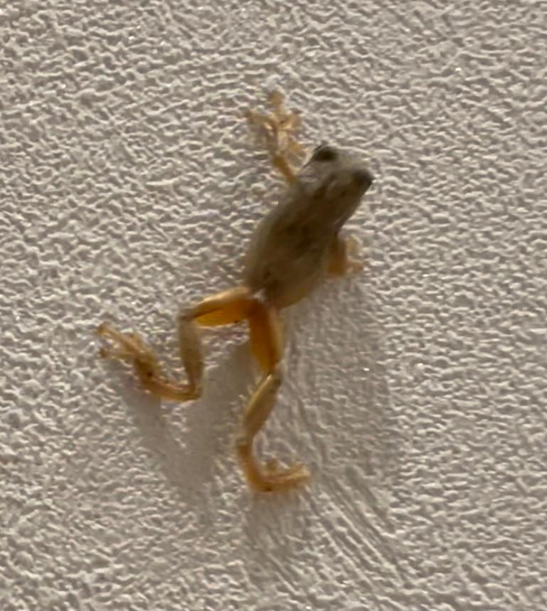 これは何ガエルですか?