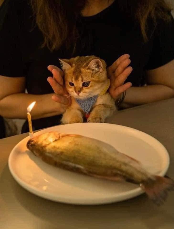 Twitterの方でめちゃくちゃ思い出せない方がいるので誰か知っている方がいたら教えて欲しいです(T . T) ・海外の方(多分) ・猫の画像 ・ツイートにあんまり言葉を書いてなかったきがする ↓この画像を投稿していた気がします、だれか知っている方がいたら!!おねがいします!!( i _ i )
