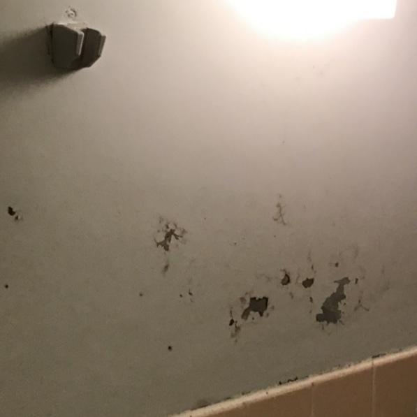 浴室の壁の材質が分かりません。 在来工法の浴室で 壁の下半分はタイル貼りになっているのですが、 上半分が何でできているのか分かりません。 写真のとおりです。 一部剥げているのですがモルタルの上からペンキを塗っているのでしょうか? お分かりになる方、教えていただけますと幸いです。 よろしくお願いいたします。