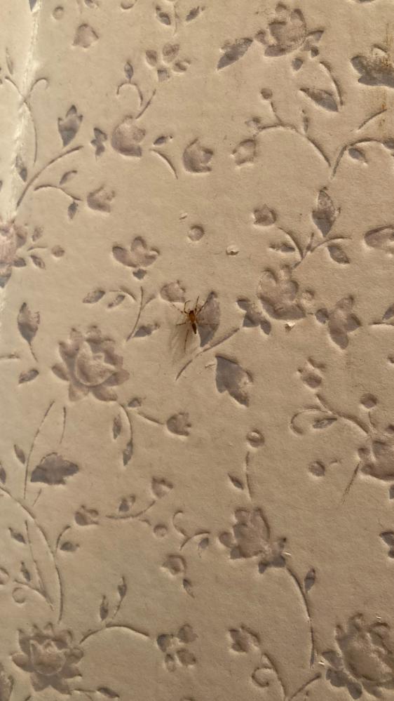 このクモはなんと言うクモですか?