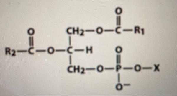 至急!「画像の化合物(Xは水素以外)から「1-アシル-リゾホスファチジン酸」を得るにはどの酵素を用いるか。」という問いで、私はPLA2(ホスホリパーゼA2)と答えたのですが、実際はA2とDの2つが答えでした。何故なのでし ょう。自分で考えてみましたがよく分かりませんでした。お願いいたします。