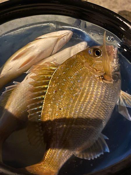 この魚は何の魚ですか?