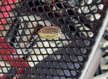 自転車のカゴにいたこの虫はなんでしょうか?