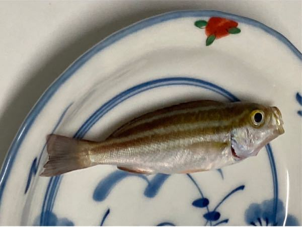 この魚の名前を教えてください。