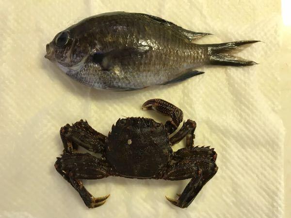 この魚とカニは何という名前でしょうか? それぞれ、食べられますか?