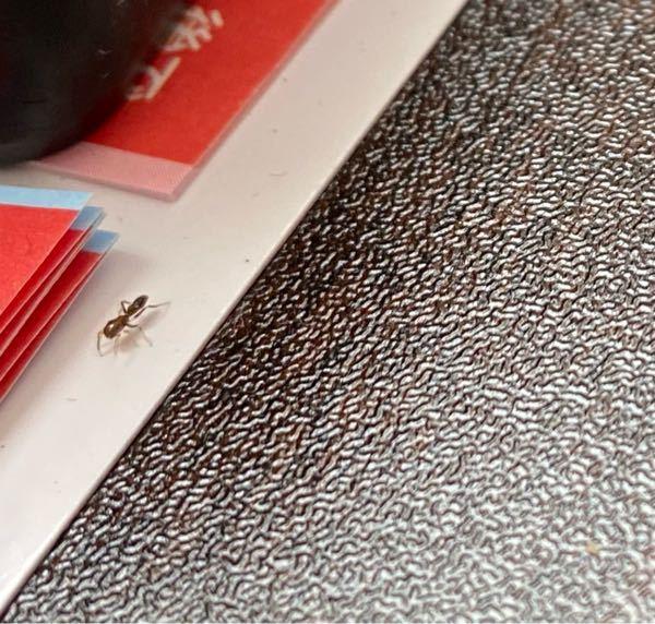 この虫なんですか? ちょっと赤っぽい気がします。