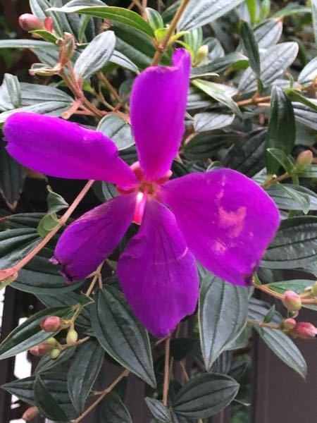 この花の名前を教えて下さいませ。