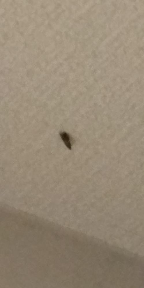 今月に入ってから、マンションの室内壁に1センチほどの羽根の付いた黒茶色の虫が毎日4,5匹ほど張り付くようになりました。名前や侵入経路は不明です。対応策をお教えください。